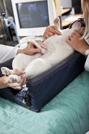 Veterinary Ultrasound Immobilizer